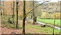 J3268 : Late autumn beeches, Minnowburn, Belfast (November 2014) by Albert Bridge