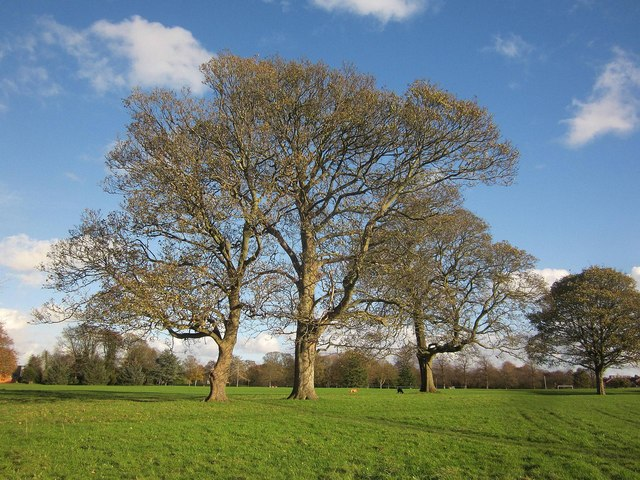 Trees, Oldbury Court