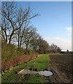 TL4157 : November sunlight by John Sutton