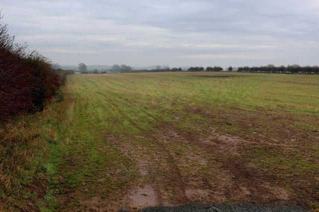 Field South of Rainton