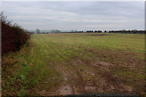 SE3774 : Field South of Rainton by Chris Heaton