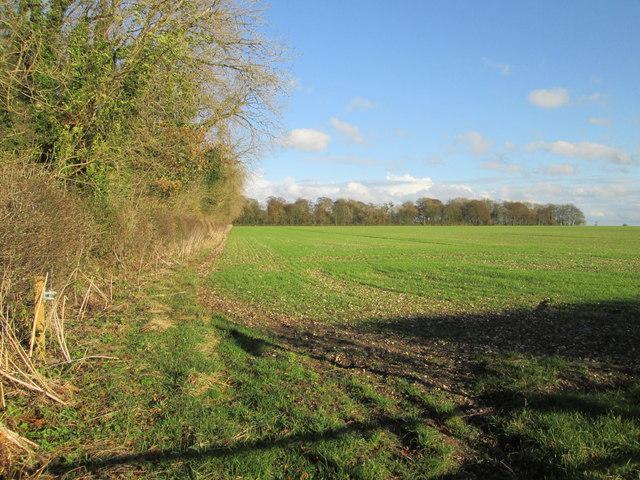 Plantation  and  field  at  Kipling  House  Farm
