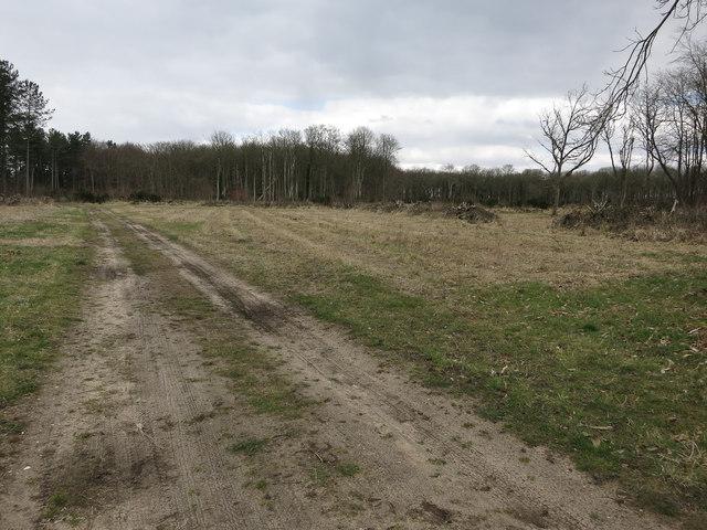 Cleared area near Cranwich Heath