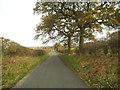 SO7790 : Shropshire Lane by Gordon Griffiths