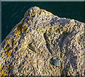 J5252 : Bench Mark, Killyleagh by Rossographer