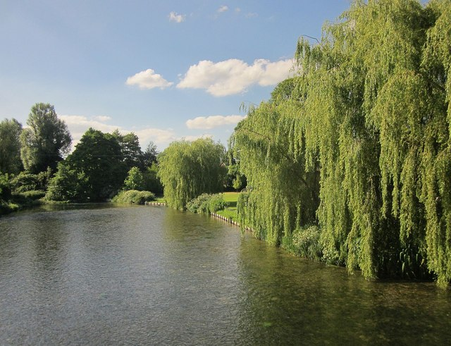 Willows by the Kennet