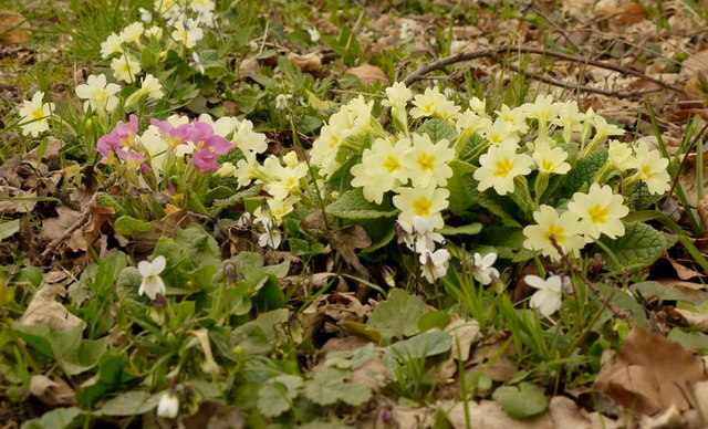 Early spring flora