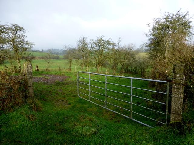 An open field, Bracky