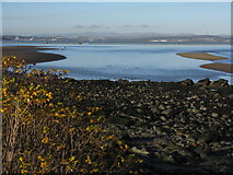 NT1977 : The Firth of Forth from Silverknowes by M J Richardson
