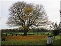 TA0760 : Autumn in Lowthorpe churchyard by Jonathan Thacker