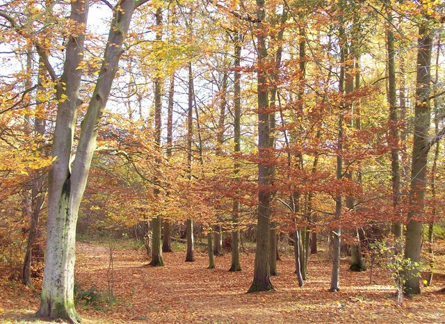Late autumn in Bourne Wood, Lincolnshire