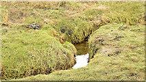 J4972 : Salt marsh, Strangford Lough, Newtownards - November 2014(3) by Albert Bridge