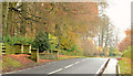 J4470 : Autumn trees on the Belfast Road, Comber/Dundonald (November 2014) by Albert Bridge