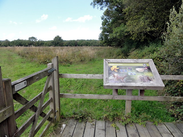 Culm Grassland from a Viewing Platform