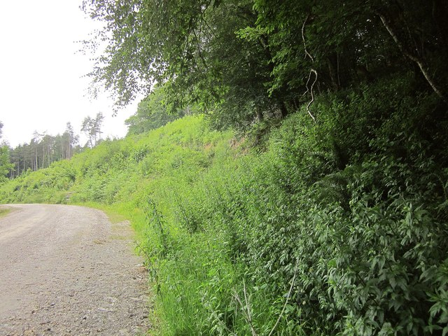 Bank and track, Cann Wood