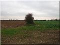 TF7823 : Hedgerow beside Mad Dog Lane by Adrian S Pye