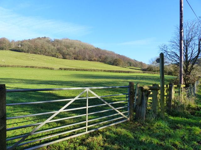 View across a field to the wooded hillside, Llanvair, near Llanishen