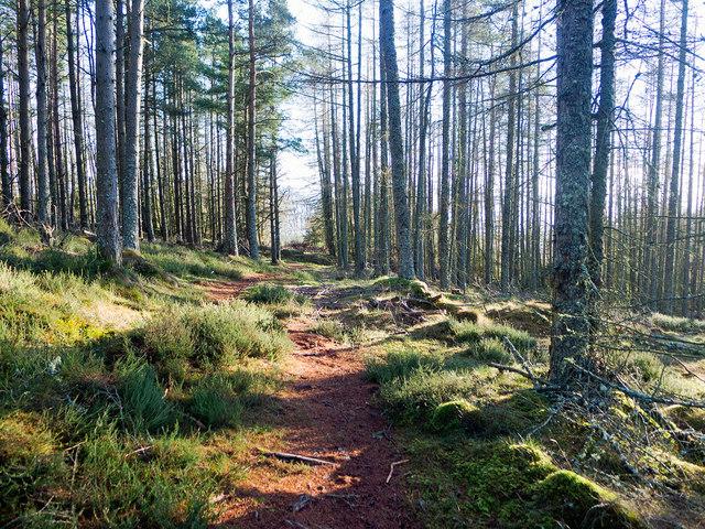 Footpath on Callachy Hill