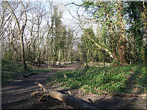 TQ3472 : Sydenham Hill Woods (1) by Stephen Richards
