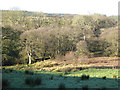 NY4976 : Wooded valley of the Sleet Beck by Oliver Dixon