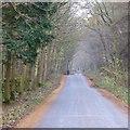 SD5476 : Lane by Lime Kiln Plantation by David Lally