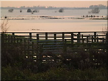 TL5392 : Pink waters - The Ouse Washes near Welney by Richard Humphrey