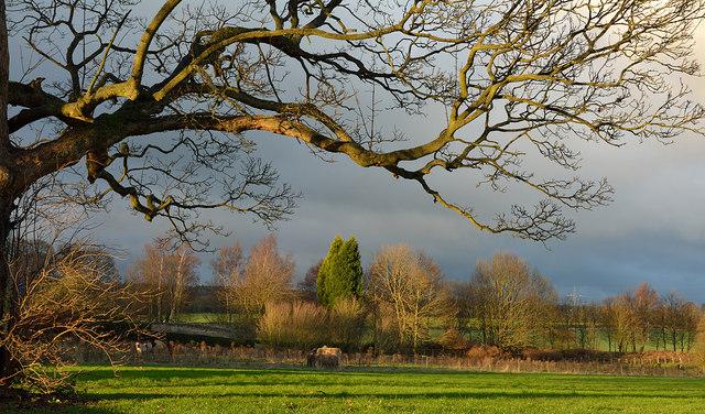 Field at Brancepeth