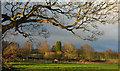 NZ2238 : Field at Brancepeth by Trevor Littlewood