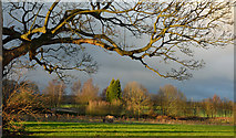 NZ2238 : Field at Brancepeth by Trevor Littlewood