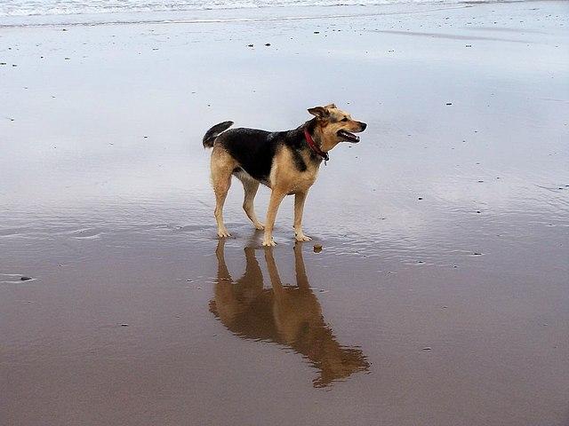 Reflective Dog