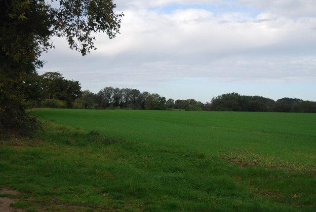 Farmland, Runhall Rd