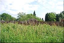 TQ5244 : Wall, Penshurst Park by N Chadwick