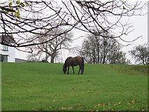 SJ5444 : Horse at Wood Farm by Stephen Craven