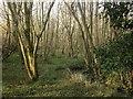 TQ2924 : Former Mill Pond by Simon Carey