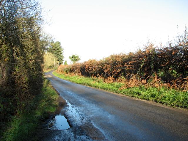 View along Broad Lane by Evelyn Simak