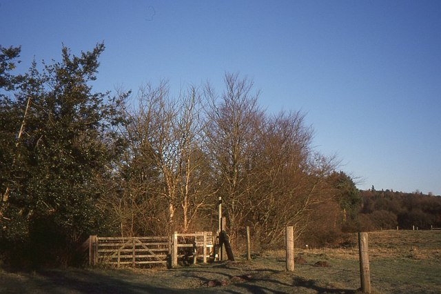Woodland edge, Blakeshall