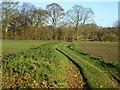 TF8824 : Green lane to Bottom Coppice, South Raynham, Norfolk by Richard Humphrey