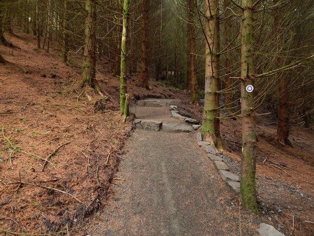 Path through Goukhill Plantation