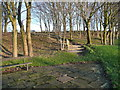 SE0027 : Steps in the little wood above Dodd Naze by Humphrey Bolton