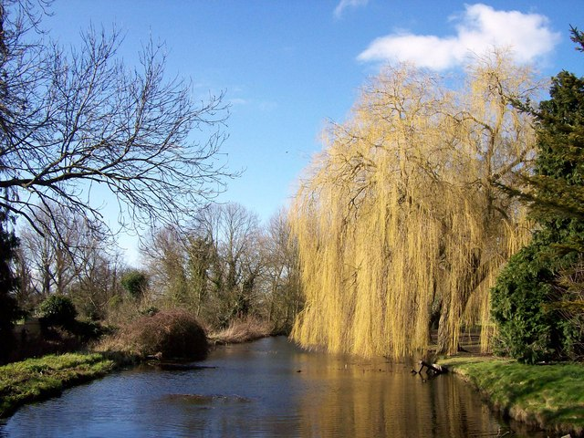 Weeping willows along the Bourne Eau, Lincolnshire.