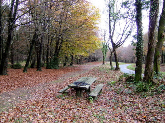 Wentwood Forest picnic area