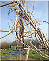 SP2966 : Last yearz beanz, Potterton's Allotments, Warwick by Robin Stott