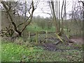 SJ9691 : Gigg Brook by Dave Dunford