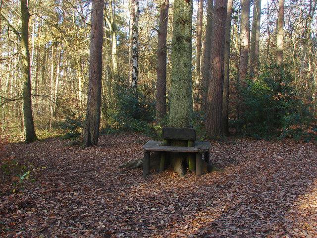 Woodland seat, Heath Lake