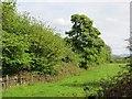 NT1072 : Wooded embankment by Richard Webb