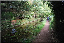 TL4556 : E2 path and Vicar's Brook by N Chadwick