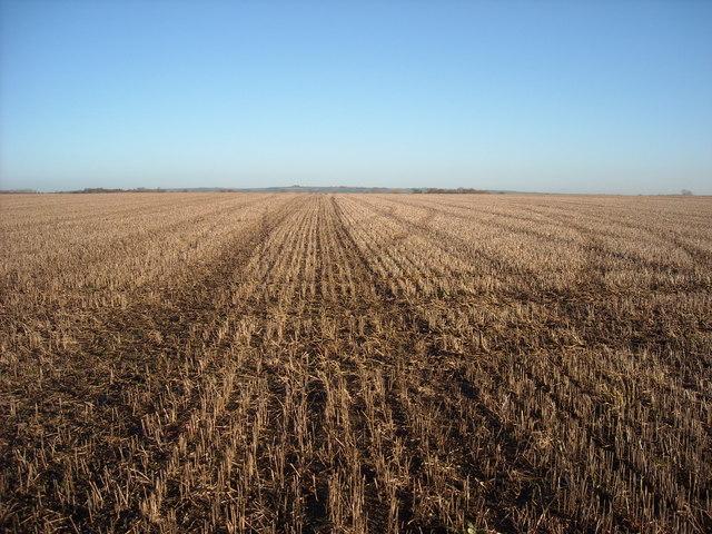 Arable field, near Compton Bassett