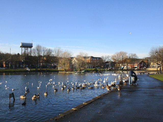 Feeding the birds at the Mere, Askern