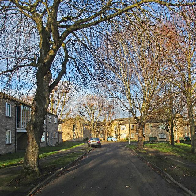 Winter sunlight, Neville Road