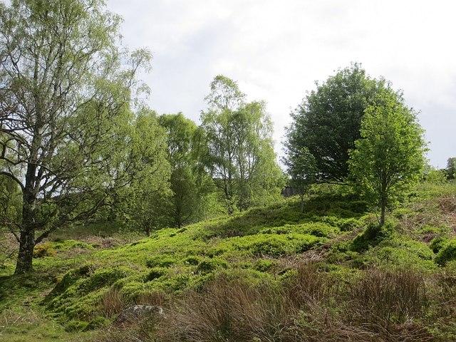 Birch wood, Hepburn
